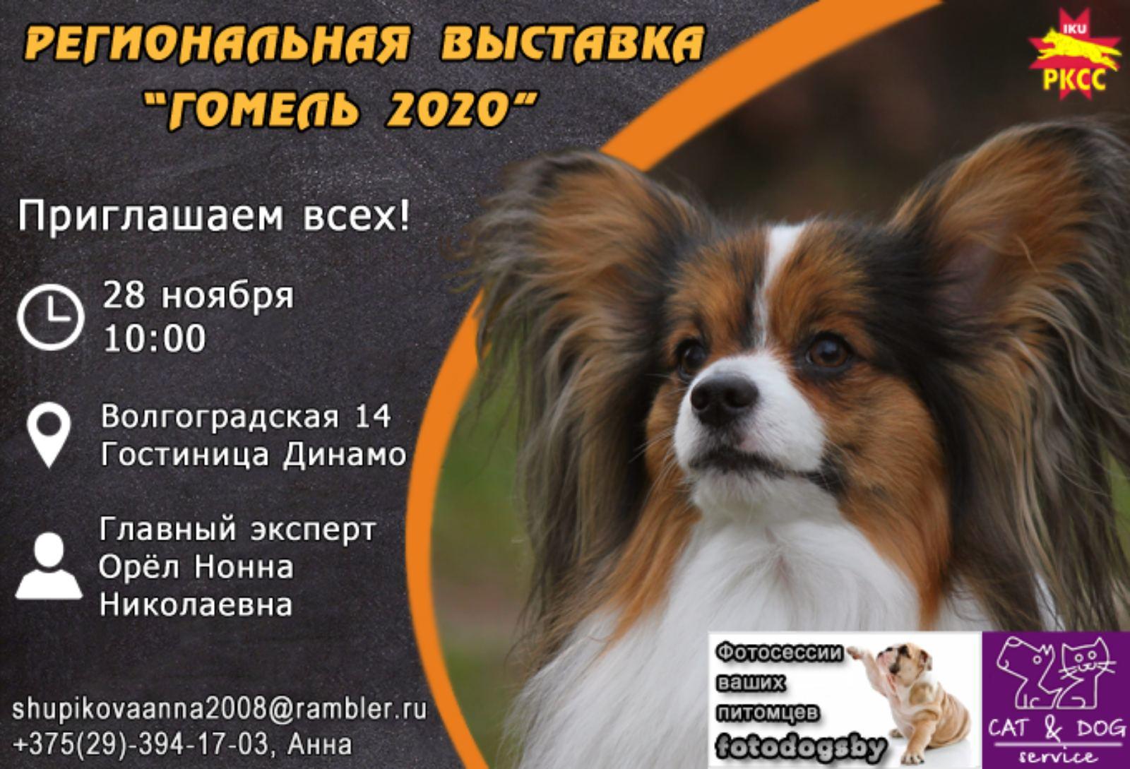 Выставка собак в Гомеле 2020